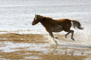 wild, horse, runs, gleefully, refuge, land