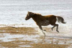 wild, horse, runs, gleefully, refuge, land