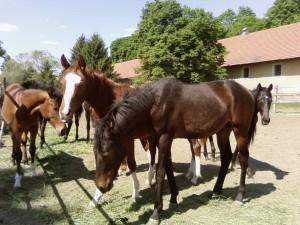 beautiful, horse