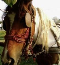 beautiful, horse, head, profile