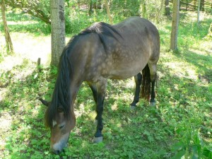 horse, eating