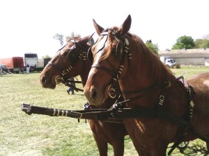 horses, ready