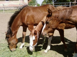 three, horses
