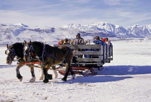 two, horses, transport, sleigh, full, people, snow
