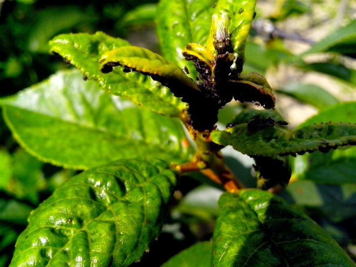 plenty, small insects, leaves