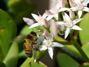 bee, wild, animal, park