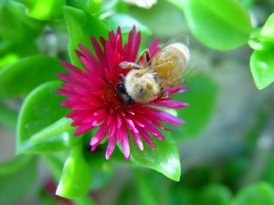 꿀벌, 꽃