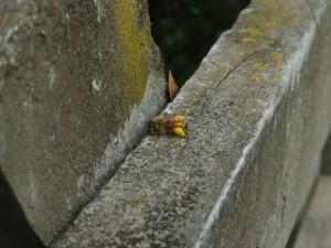 Bee, pollen