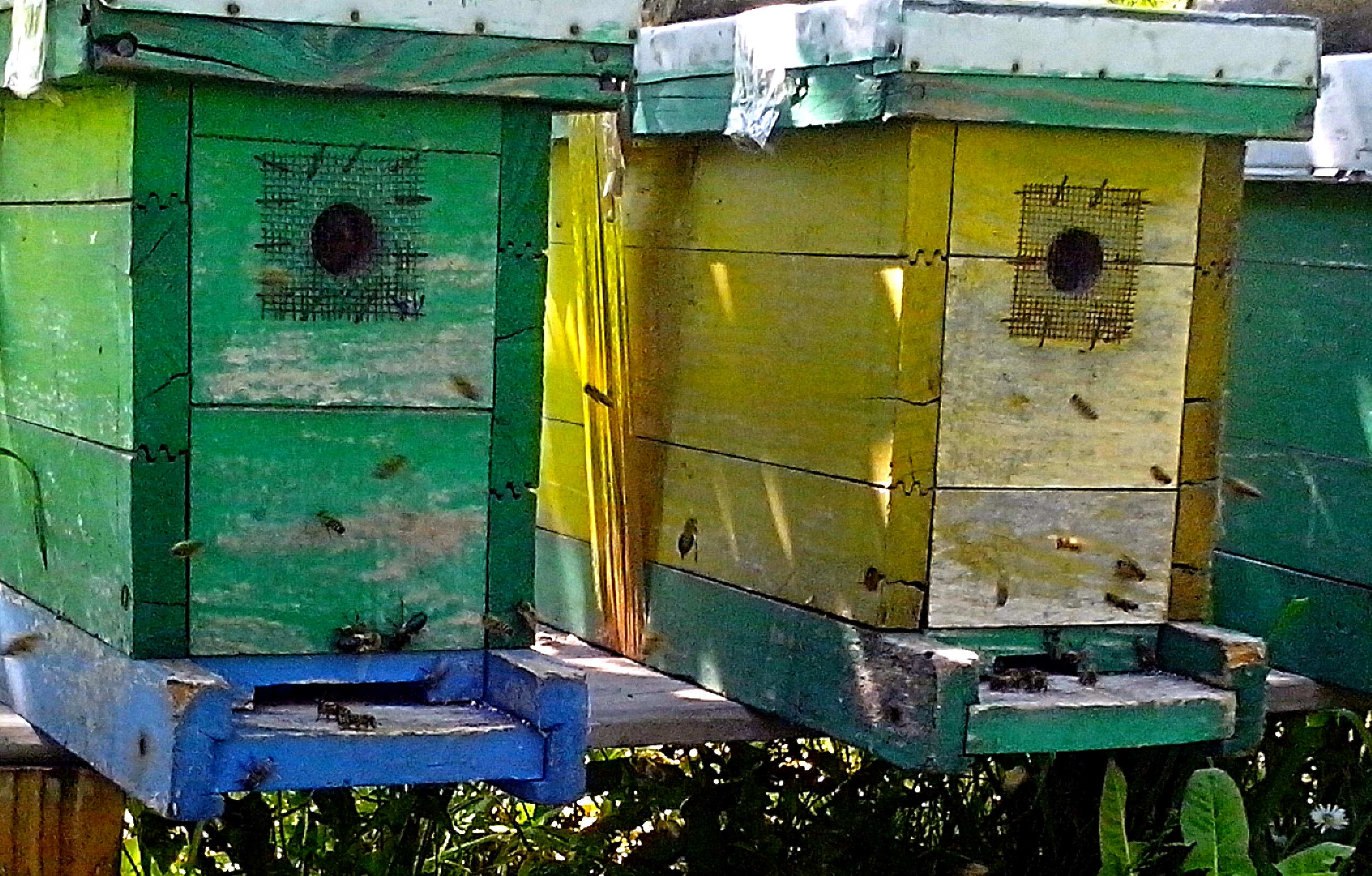 Free photograph; beehive, bees, flying