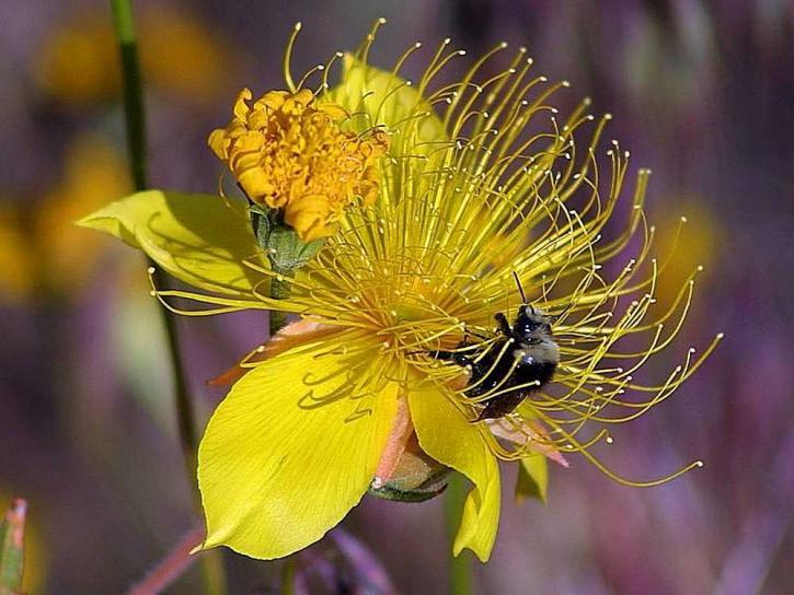 ミツバチ、花