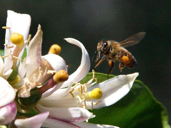 bees, flying