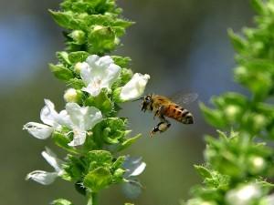 abeilles, fying, vol, ailes