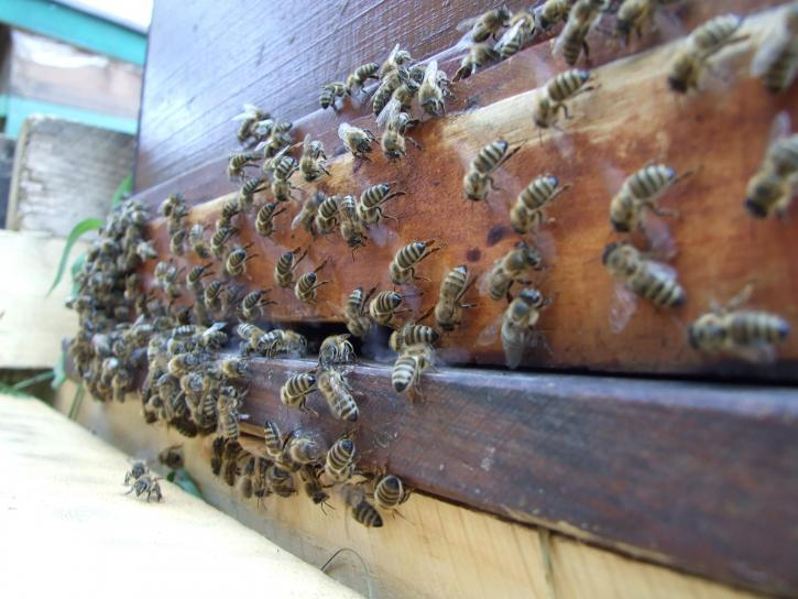 bess, getting, beehive