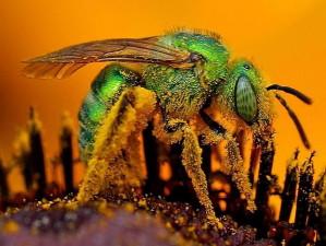 irisées, vert, abeilles