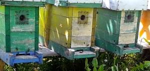 úlů, včely