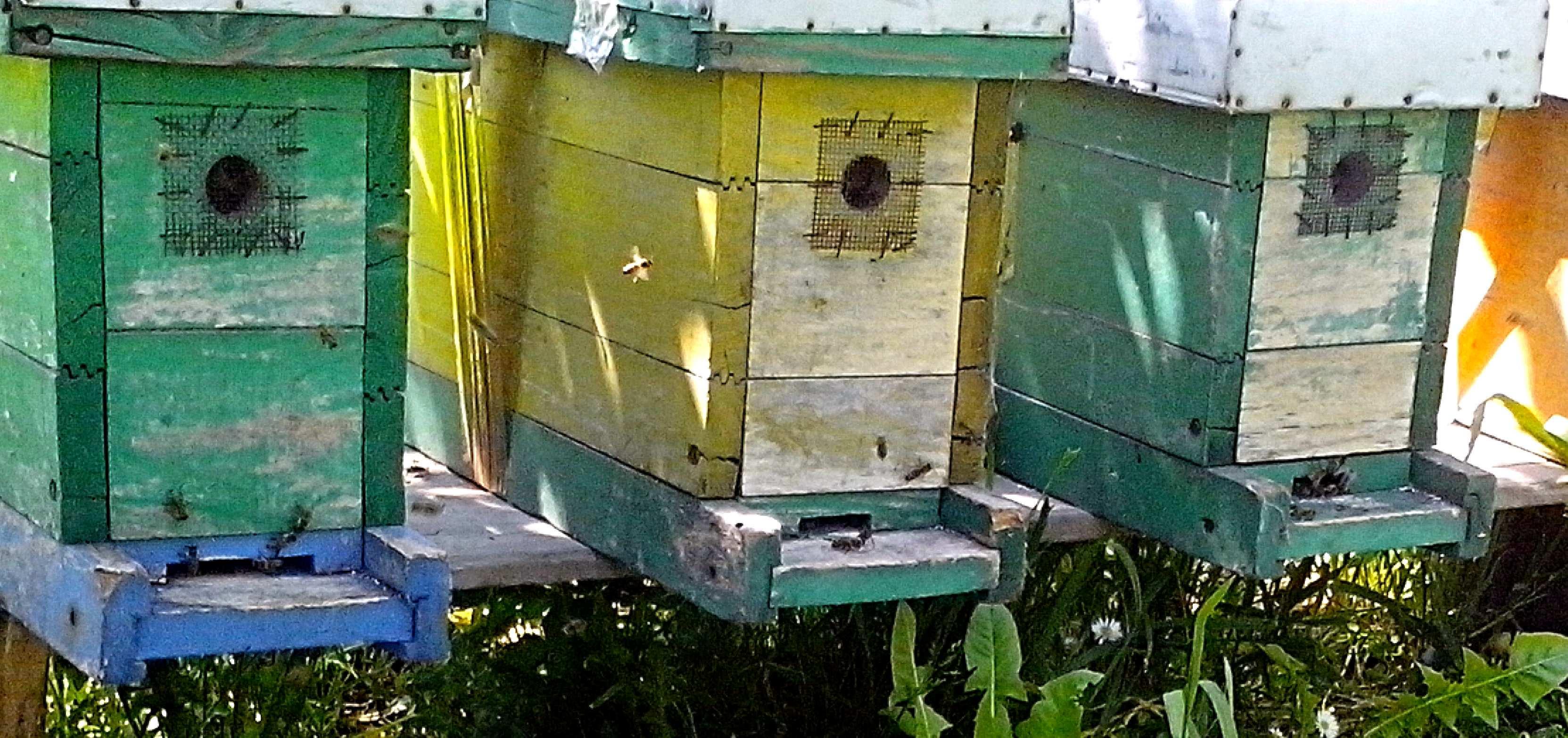 Free photograph; hives, bees