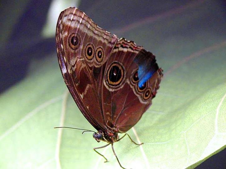 motýle, lístie