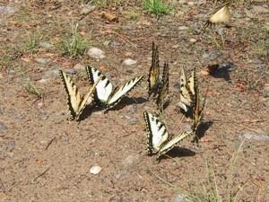пеперуди, земята