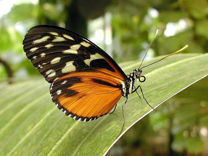 motýľ, motýle