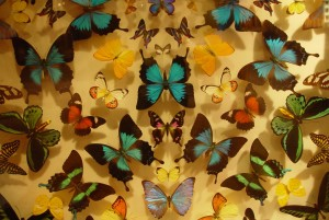 butterfly, display, scitech