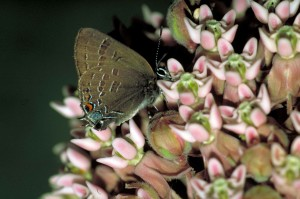 up-close, brown, butterfly, orange, neon, blue, accents