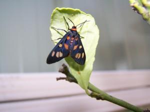 gros plan, papillon, insecte