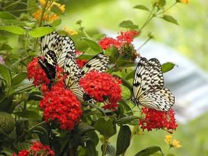 kasveja, kukkia, perhosia, perhonen