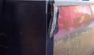 Mega, fjäril, insekt