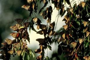 nhiều, bướm, ngồi, chi nhánh, lá