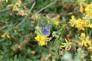 palos, verdes, azules, mariposa