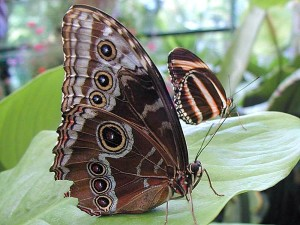растения, бабочка