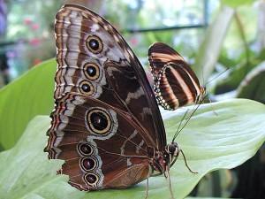 рослини, Метелик