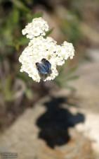 petit, papillon, fleur