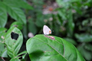 small, white, butterfly, big, green leaf