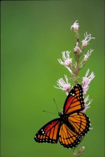 butterfly, small, insect, yellow flower
