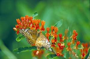 yellow, butterfly, white, brown, black, markings, sitting, orange, blossom, wings, spread