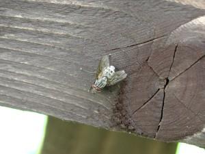 lietať, hmyzu, skladom Foto