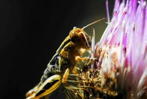 메뚜기, 교수형, 꽃