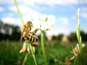 wasp, grass