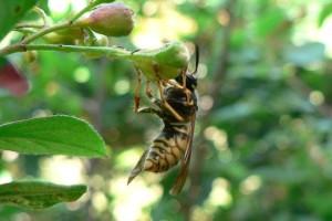 wasp, flower