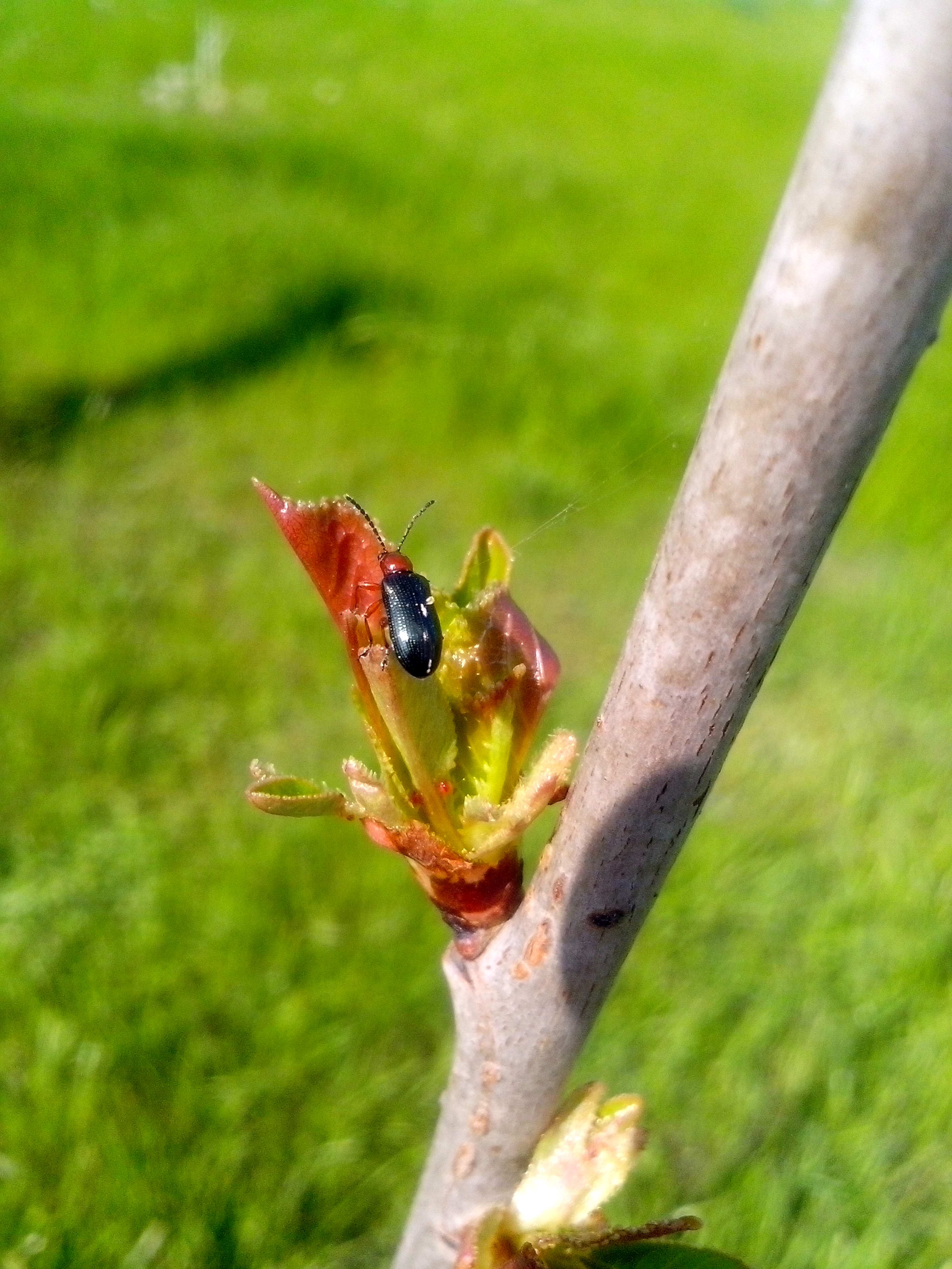 Free photograph; insect, bud, wood