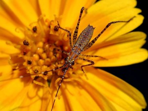 insects, big, orange flower, macro