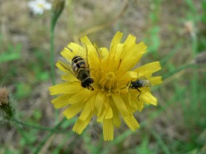 insects, yellow flower