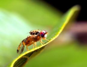 muškarac, Zdrobljena muha, sresti, insekata