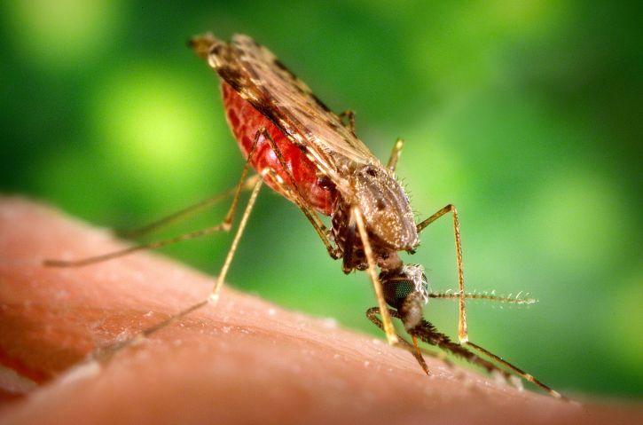 vysoká, definice, s vysokým rozlišením, zblízka, hmyz, obrázek