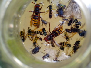 several, different, types, insects, bottle