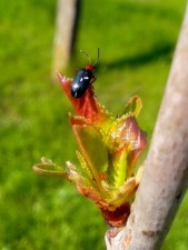 small, black, insect, bud, wood