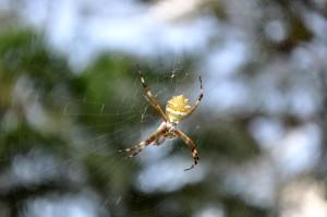 dettagli, immagine, ragno, rete