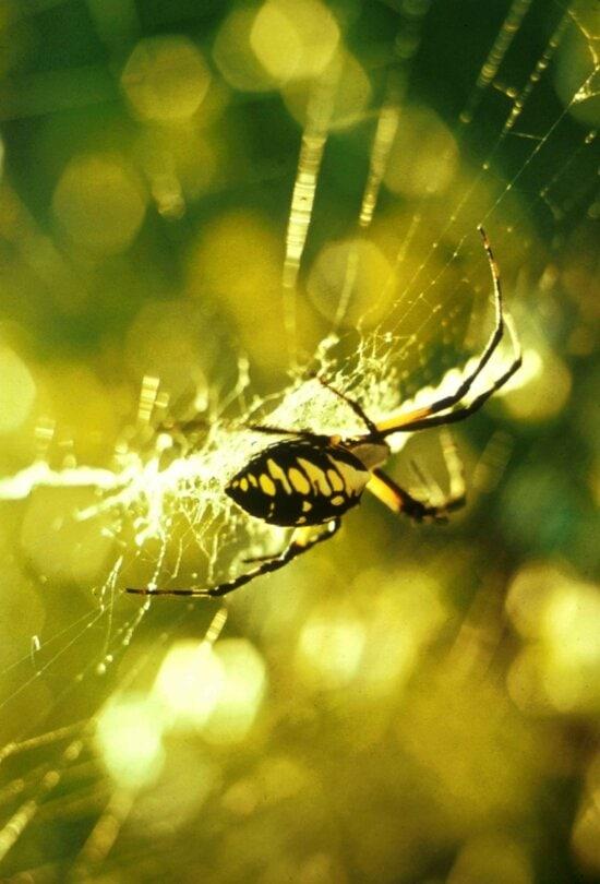 garden, spider, spider, web, macro, photography