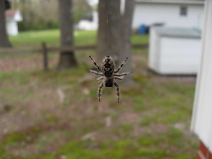 pendre, araignée